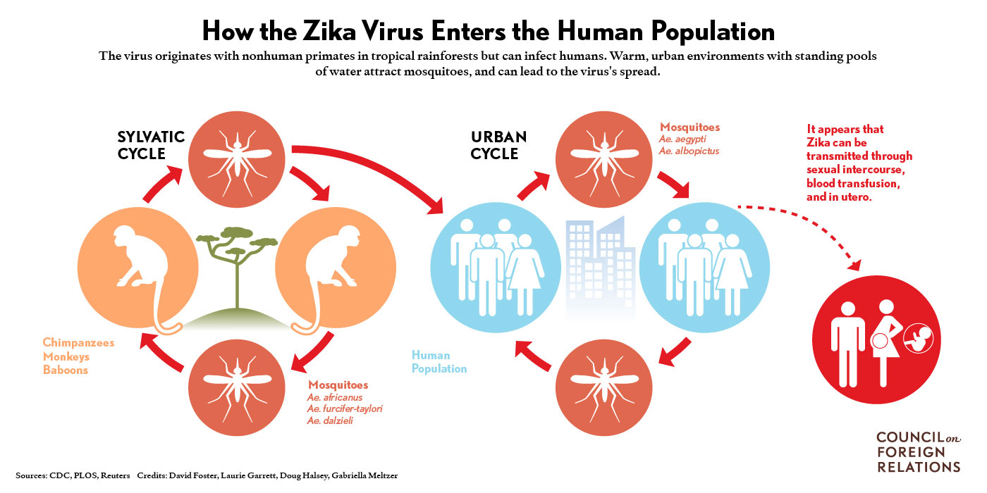 Mosquitoes As Flying Syringes The Solution To Rapid Zika Monitoring Halsey Taylor Wiring Diagram Additional Information