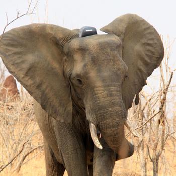 Resolving Human Elephant Conflict In Kenya Experiment