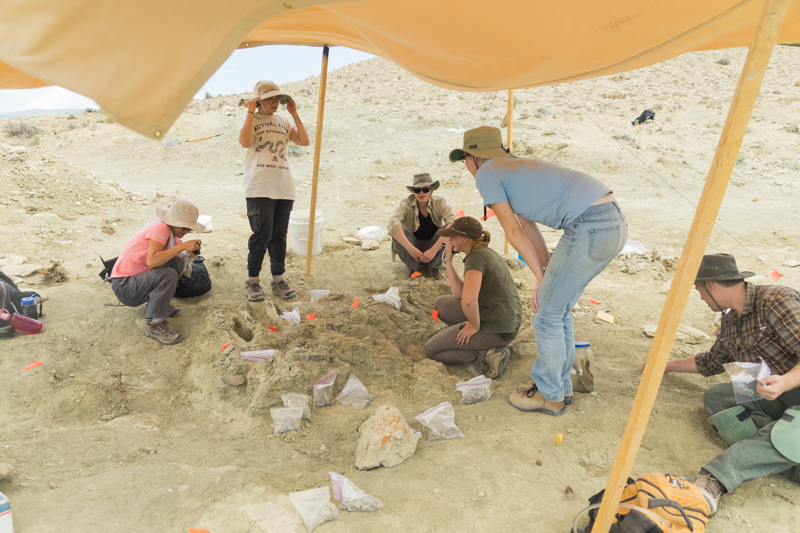 bighorn basin paleontological institute s 2017 field expedition