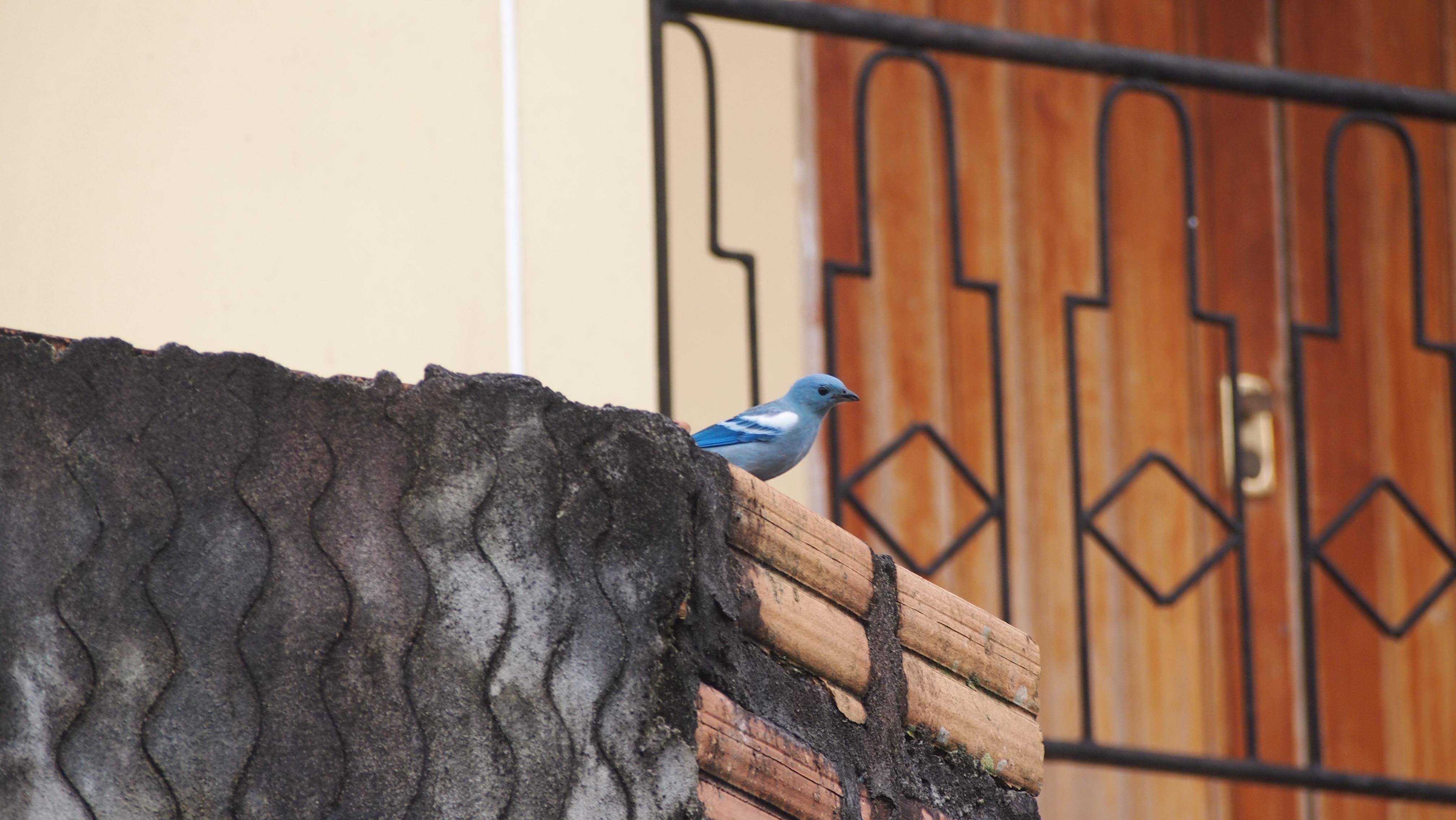 Iquitos, city and birds / Iquitos, city and birds | Experiment